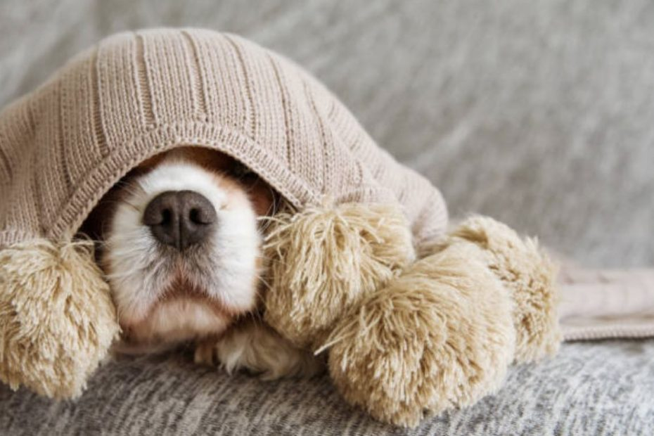 Upholstery Cleaning For Pet Lovers