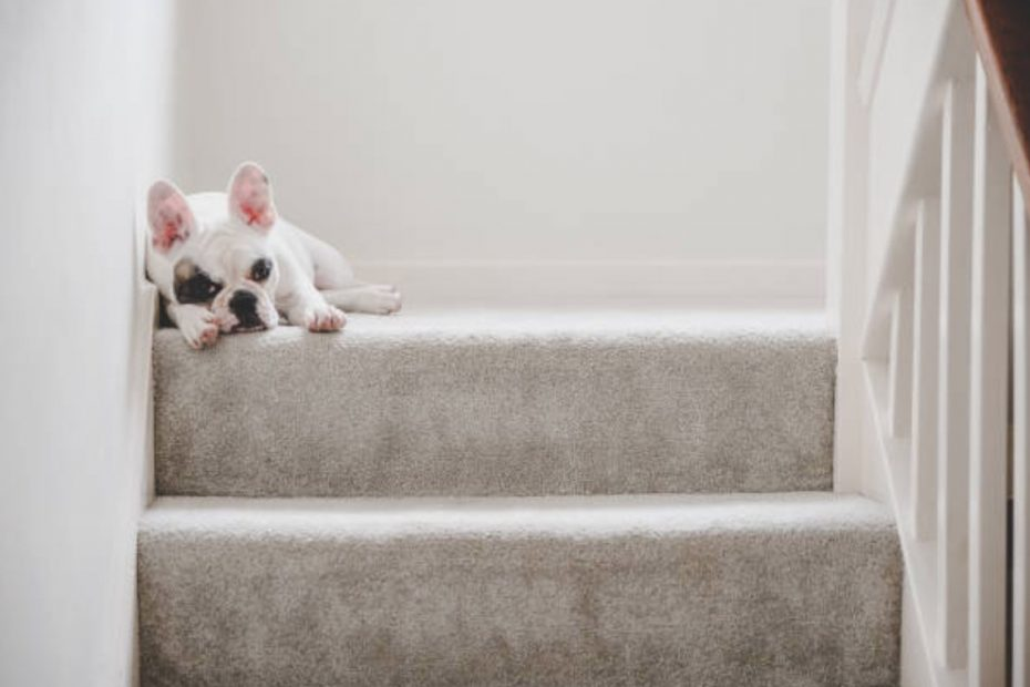 carpet stairs cleaning